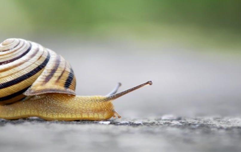 La bave d'escargot, une manne pour les produits cosmétiques ?